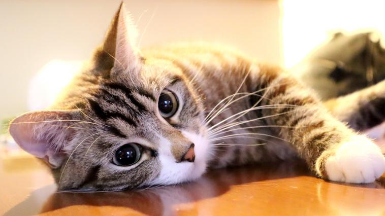 シェアスペース タカラバコ利用者へ三密の注意喚起を促すために猫の手を借りる